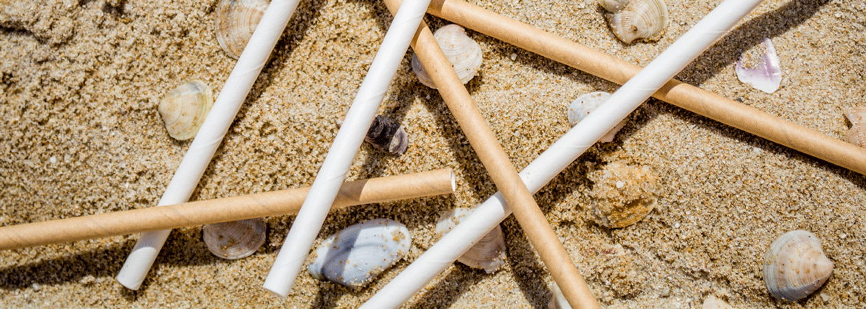sand_shells_paperstraw
